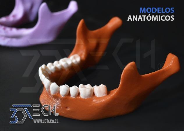 15-modelos-anatomicos